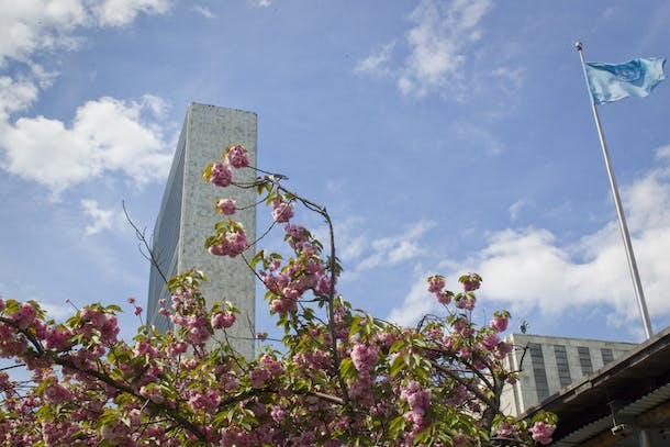 Cherry blossoms at UNHQ.