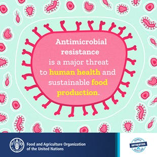 Fighting Antimicrobial Resistance with a One Health Approach