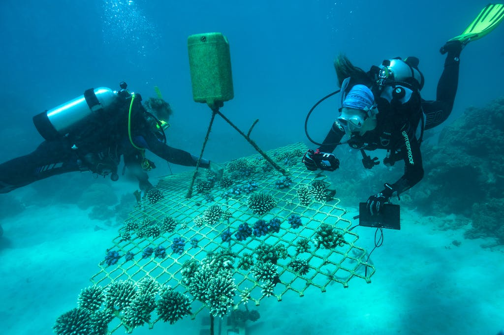 Coral nursery on the Great Barrier Reef